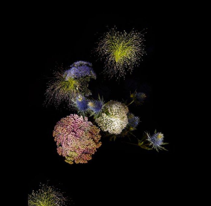 цветы, красивые фото цветов (10)