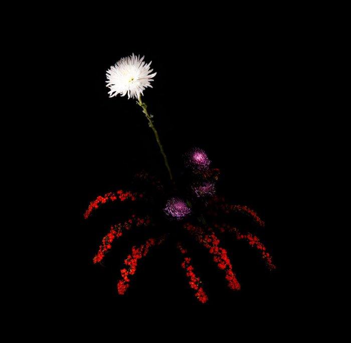 цветы, красивые фото цветов (7)