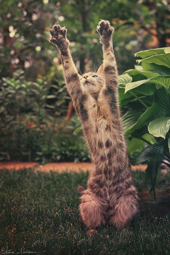 животные, прикольные фото животных (3)