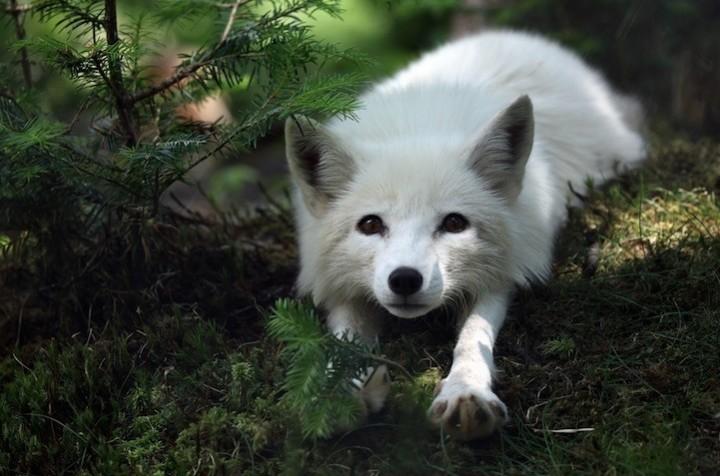 животные, прикольные фото животных (12)