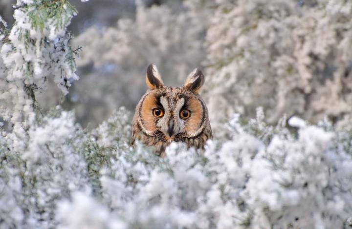 природа, красивые фото природы, фотопейзажи, зима (19)