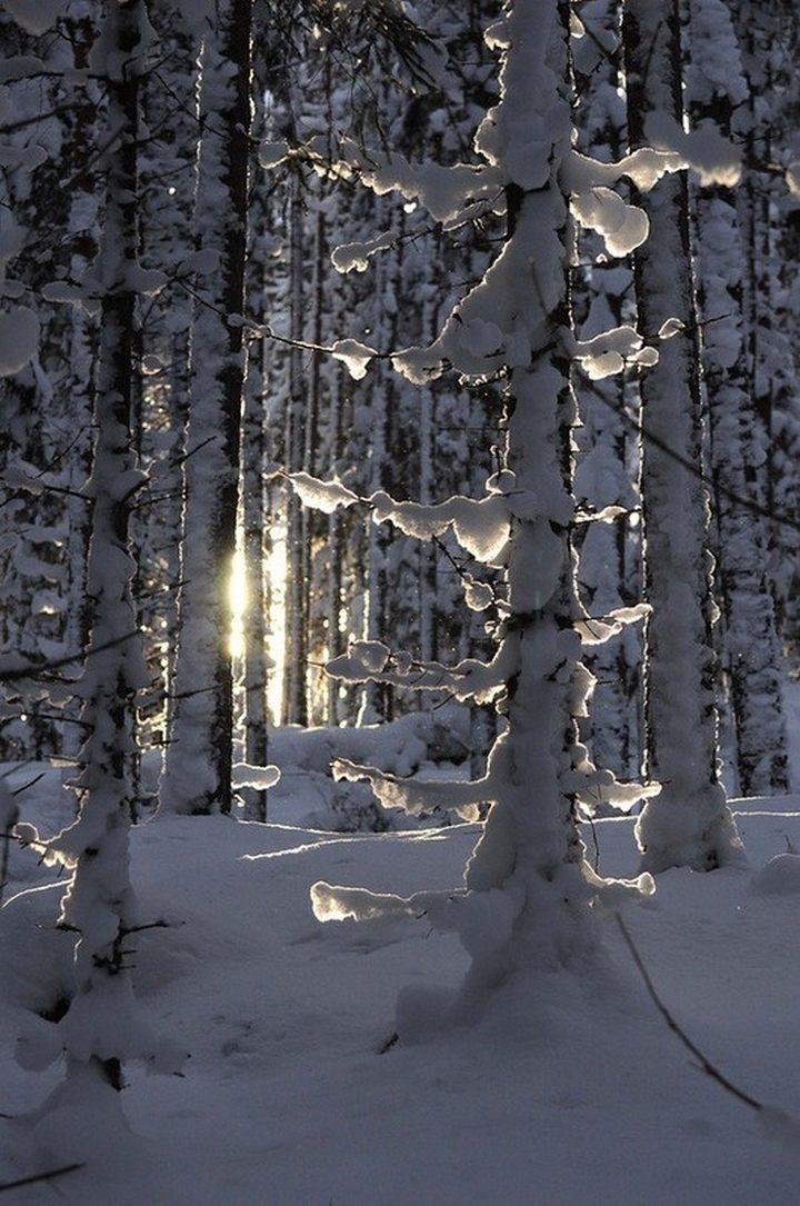 природа, красивые фото природы, фотопейзажи (16)