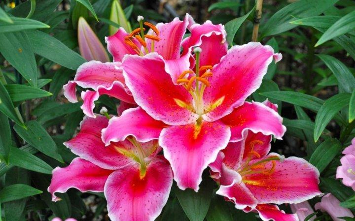 цветы, большие фото (5)