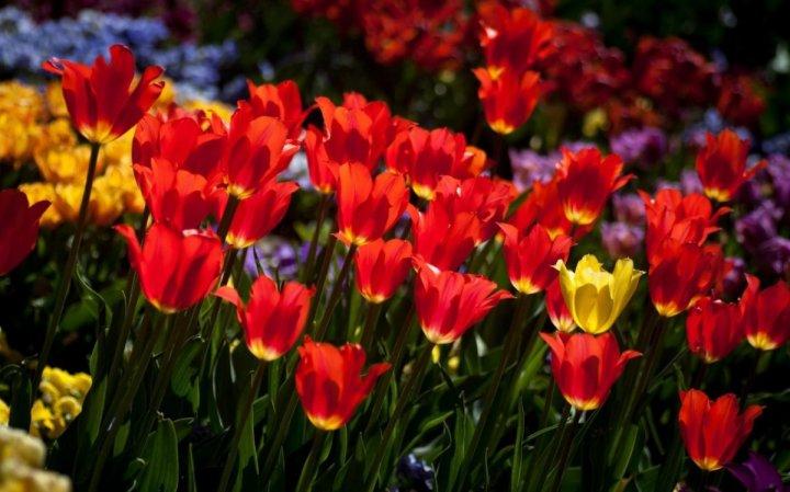 цветы, большие фото (4)
