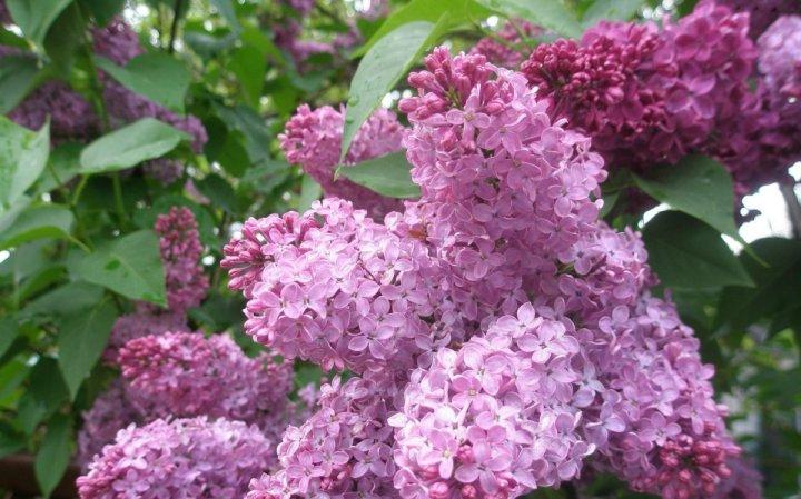 цветы, большие фото (3)