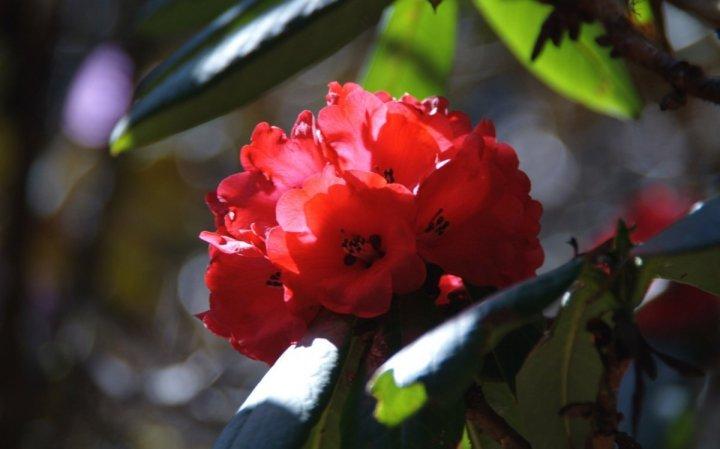 цветы, большие фото (15)
