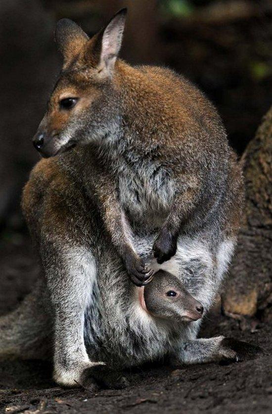 животные, прикольные фото животных (27)