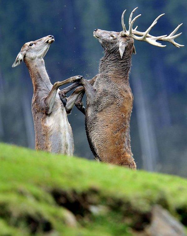 животные, прикольные фото животных (24)