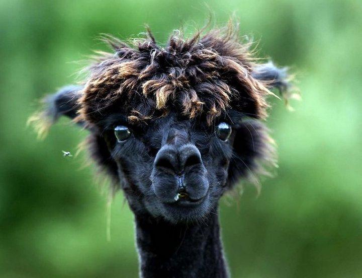 животные, прикольные фото животных (11)