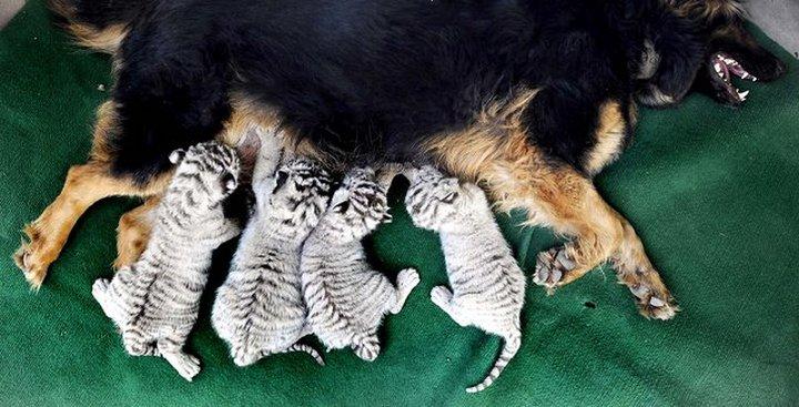 животные, прикольные фото животных (4)