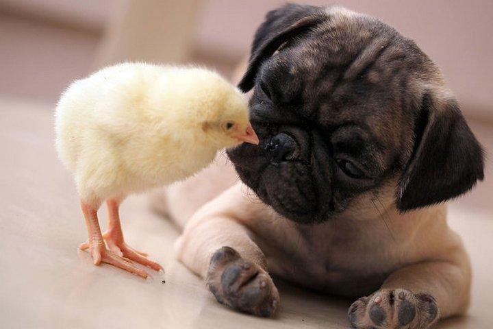 животные, прикольные фото животных (1)