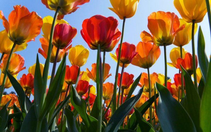 цветы, большие фото (12)