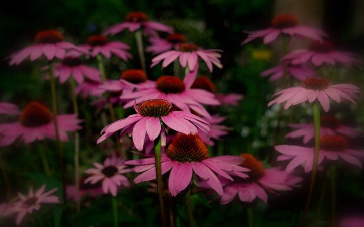 цветы, большие фото (18)