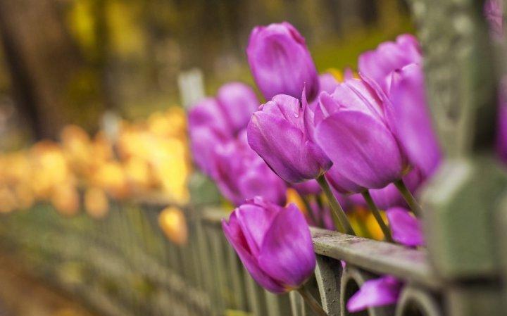 цветы, большие фото (1)