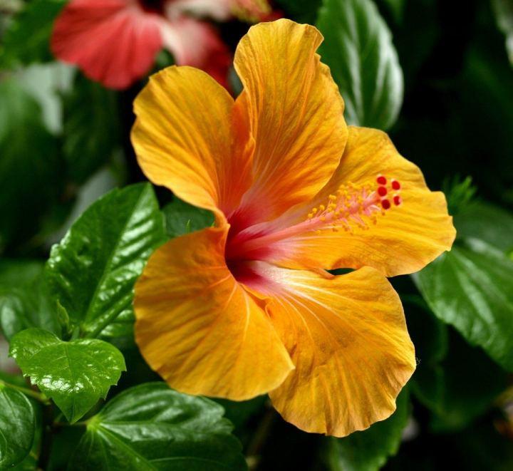 цветы, большие фото (22)