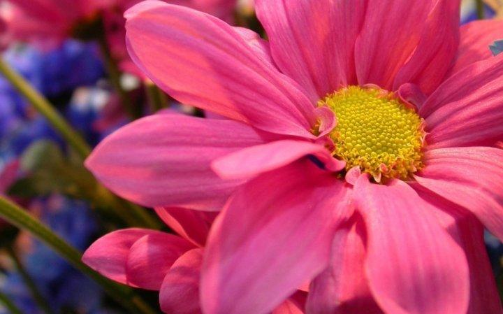 цветы, большие фото (21)
