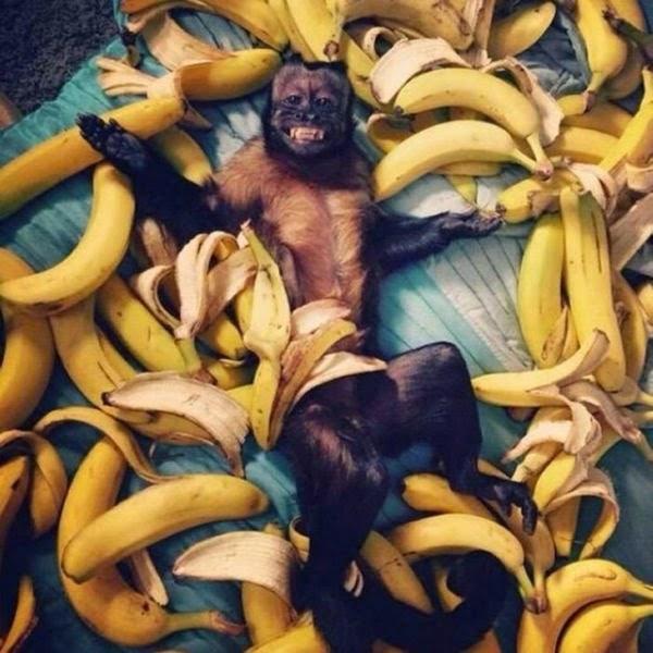 животные, прикольные фото животных (19)