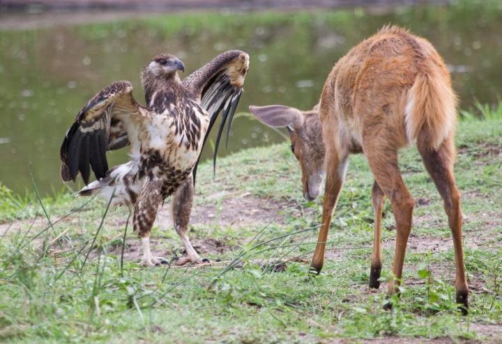 животные, прикольные фото животных (16)