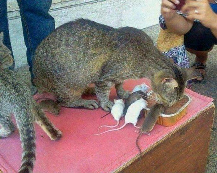 животные, прикольные фото животных (26)