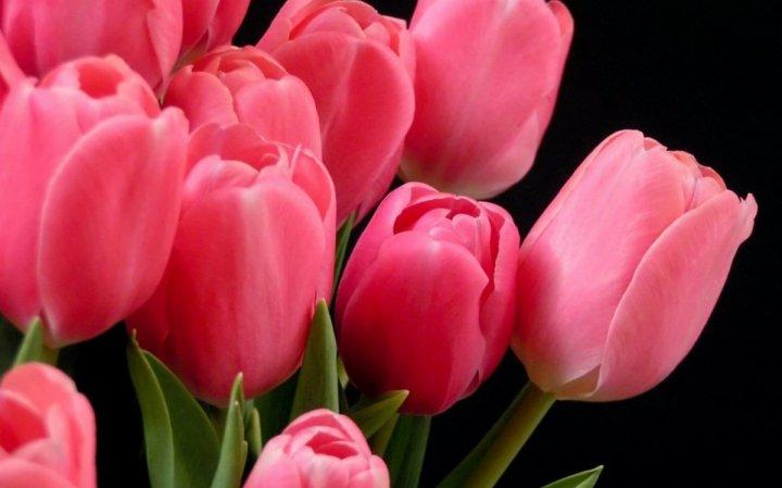 цветы, большие фото (7)