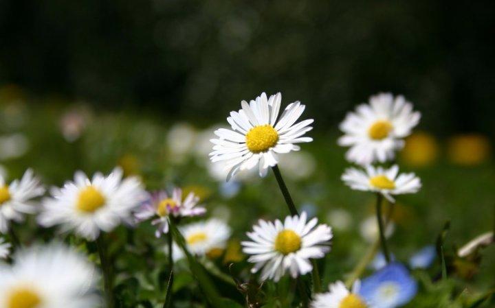 цветы, большие фото (6)