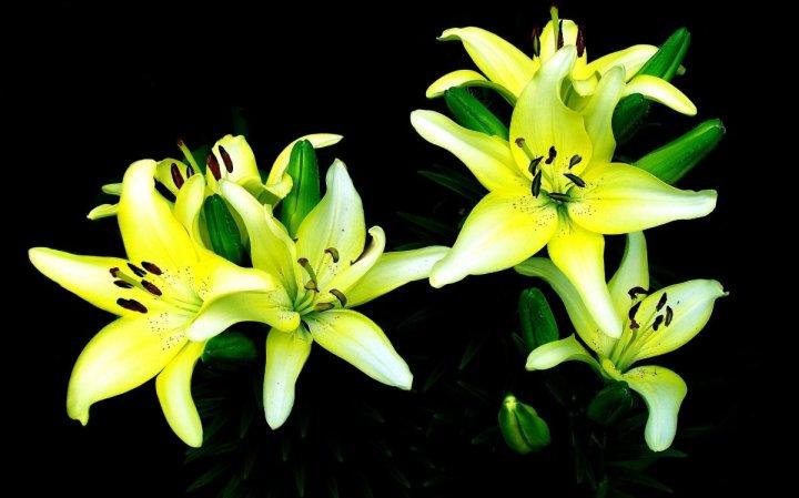 цветы, большие фото (10)
