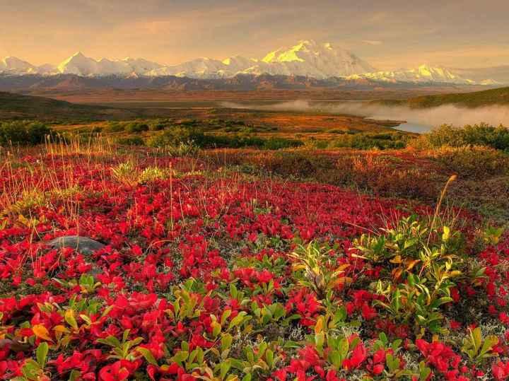 природа, красивые фото природы, фотопейзажи (6)