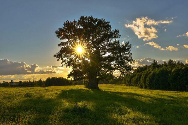 природа, красивые фото природы, фотопейзажи (17)
