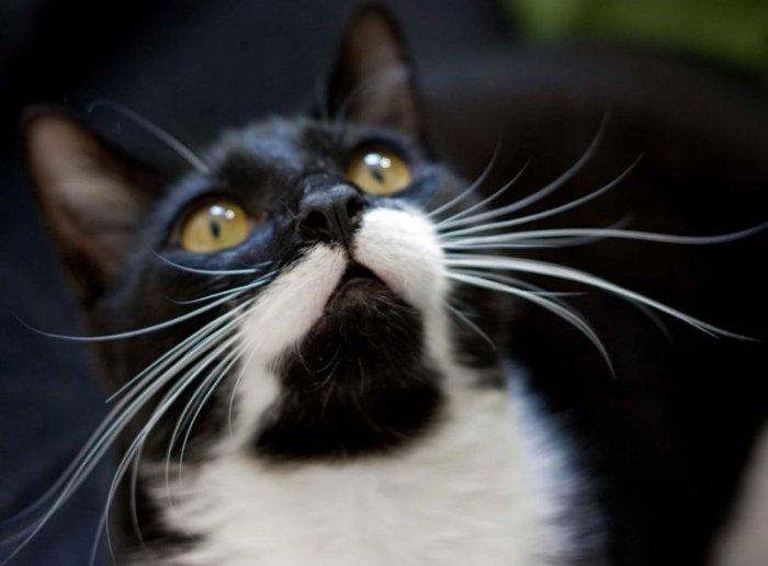 Несколько забавных и интересных фактов о кошках