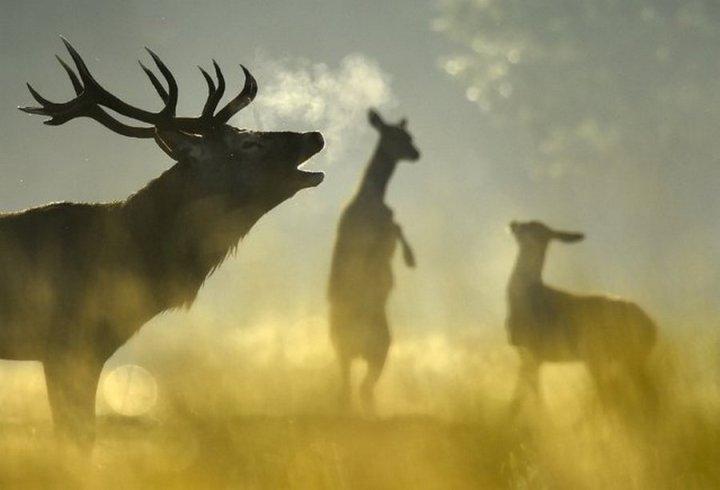 фото, животные (7)
