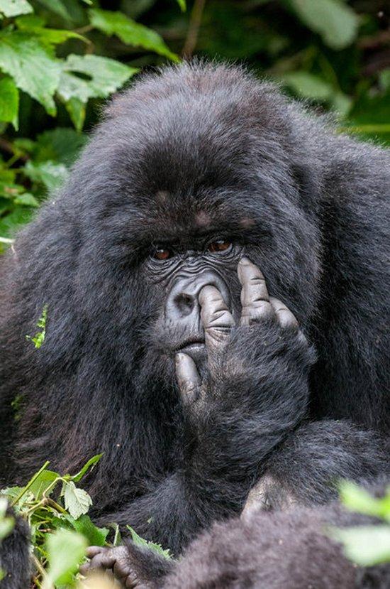 прикол, животные, прикольные фото животных (20)