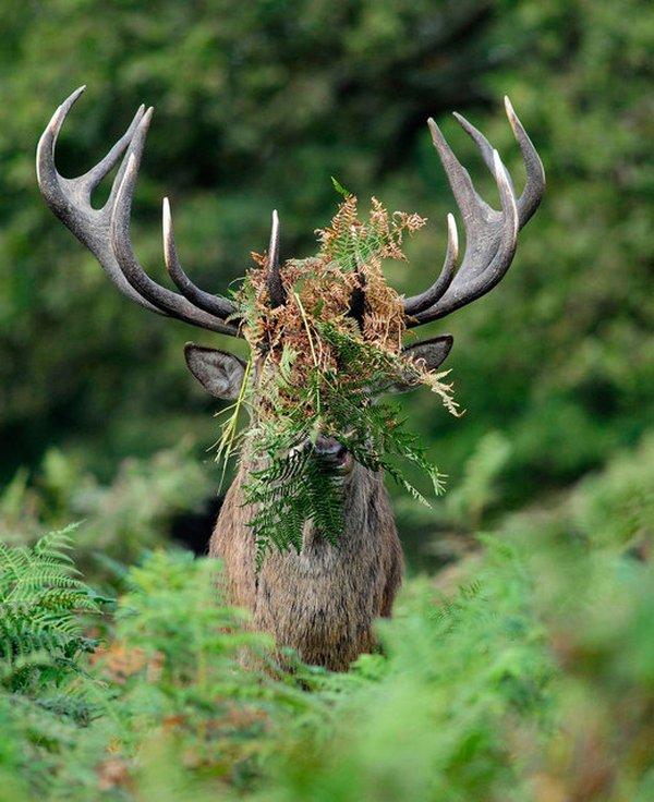 прикол, животные, прикольные фото животных (13)