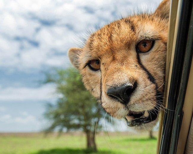 прикол, животные, прикольные фото животных (12)