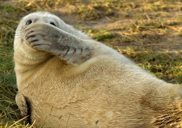 прикол, животные, прикольные фото животных (11)