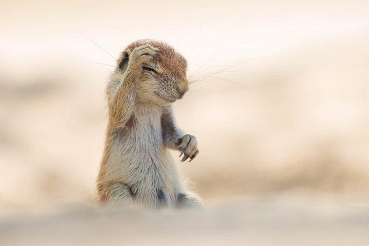 прикол, животные, прикольные фото животных (10)