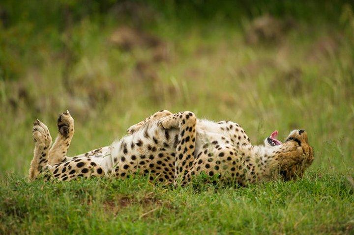 прикол, животные, прикольные фото животных (8)