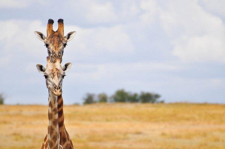 прикол, животные, прикольные фото животных (7)