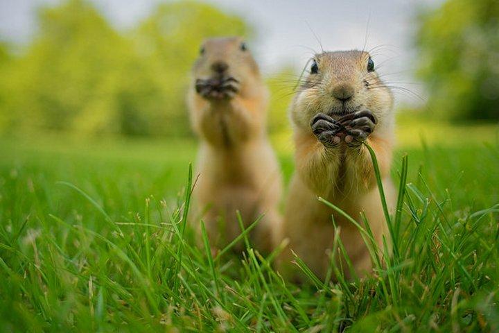 прикол, животные, прикольные фото животных (18)