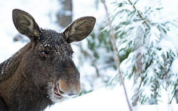 прикол, животные, прикольные фото животных (17)