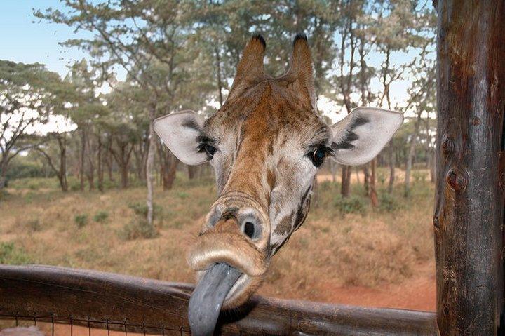 прикол, животные, прикольные фото животных (16)