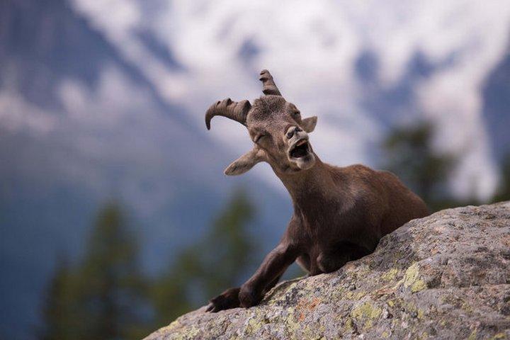 прикол, животные, прикольные фото животных (15)