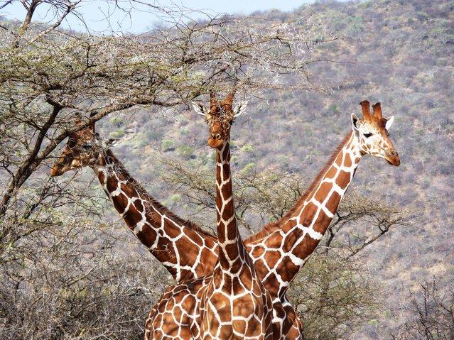 прикол, животные, прикольные фото животных (3)