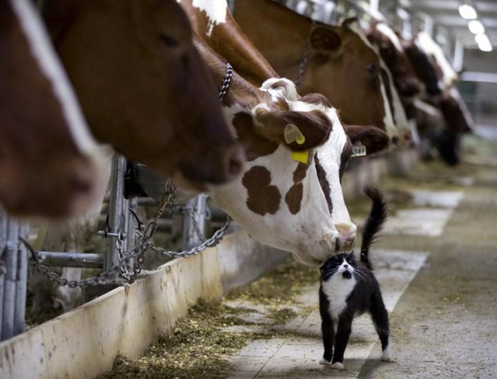 фото, животные (5)