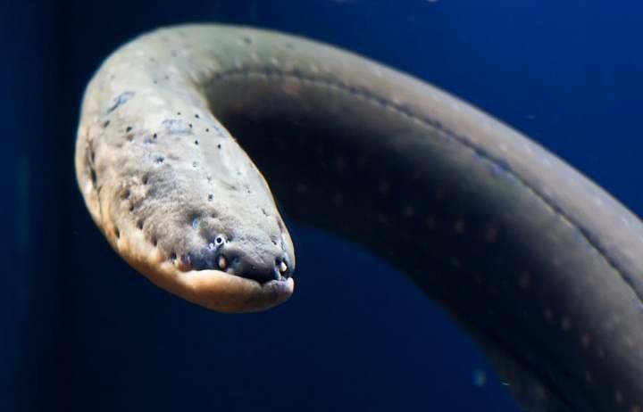 Самые опасные рыбы (1)