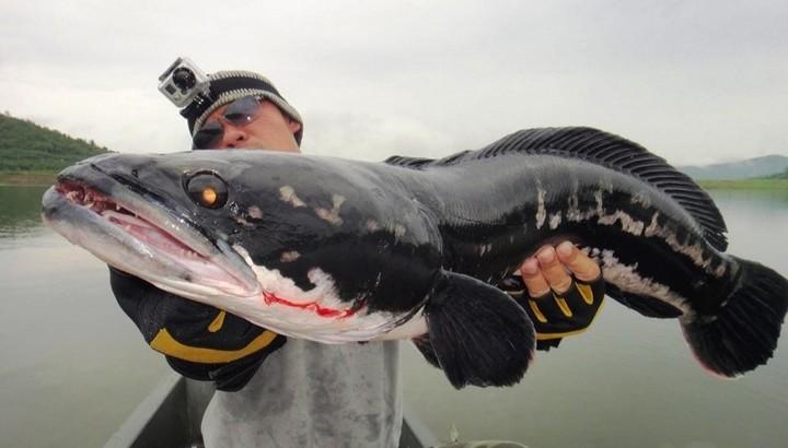 Самые опасные рыбы (3)