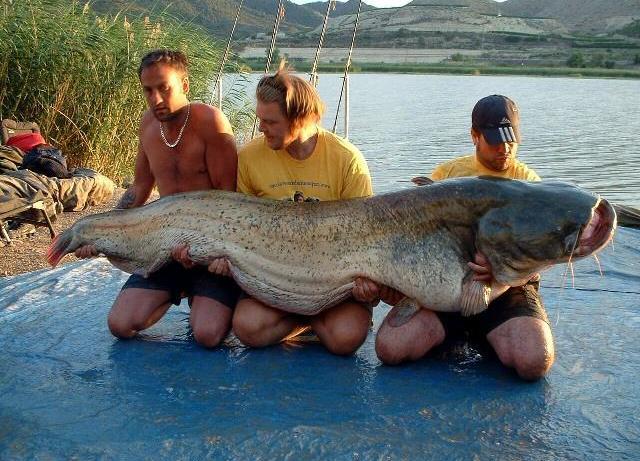 Самые опасные рыбы (4)