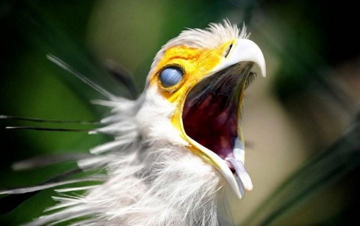 птицы, фото (14)