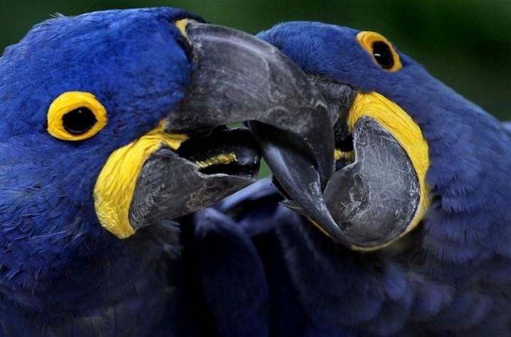 птицы, фото (13)