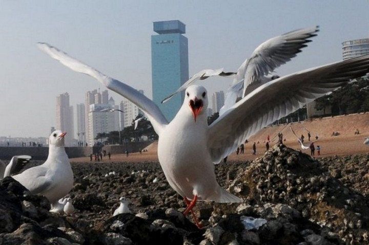птицы, фото (11)