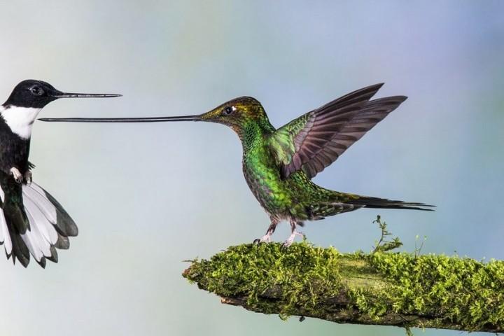птицы, фото (3)